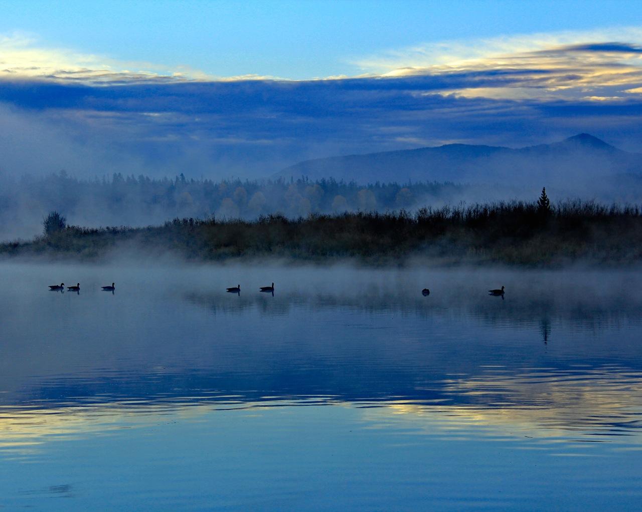 Ducks in the fog 10.21