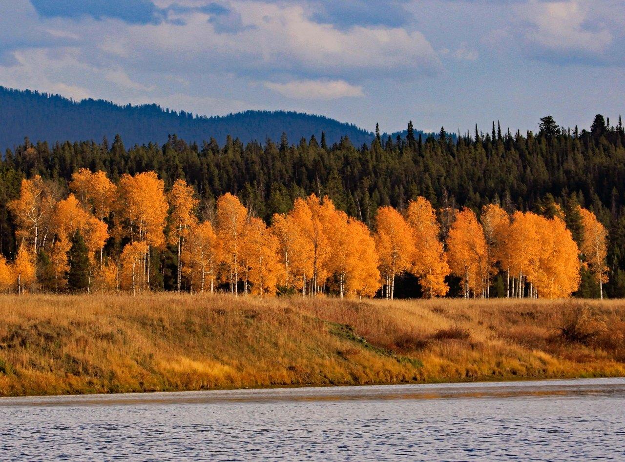 Trees snake river