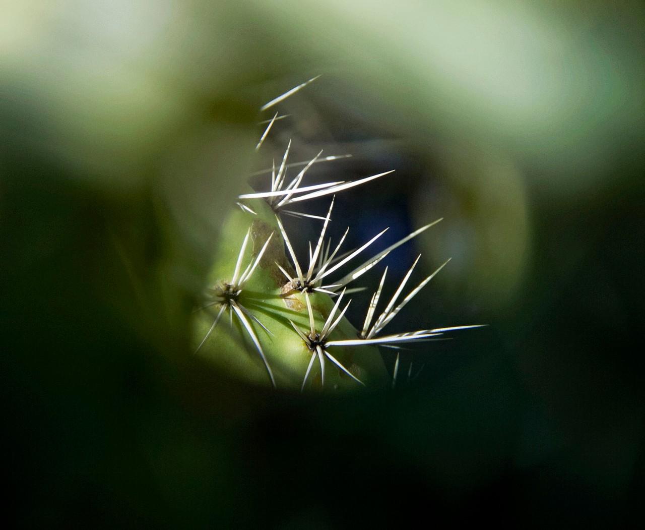 hole in cactus