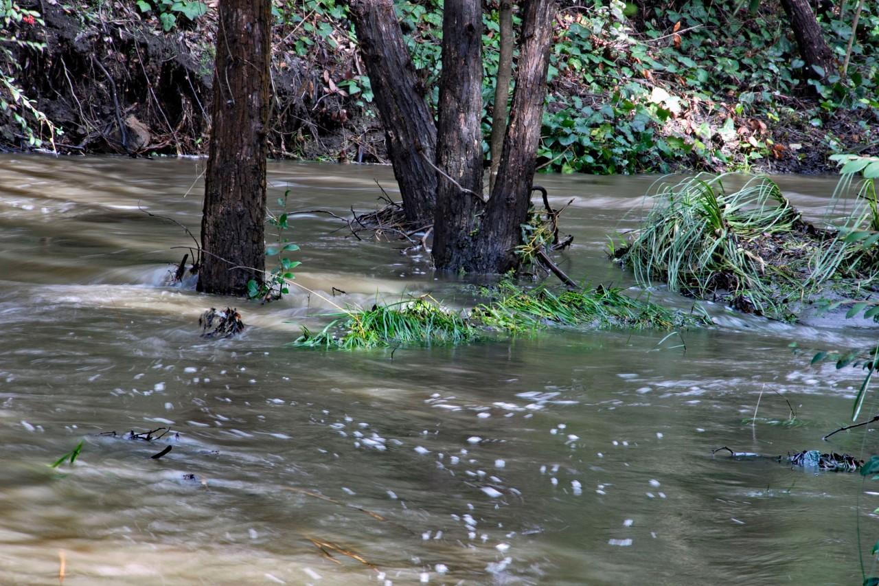 3 creek trees