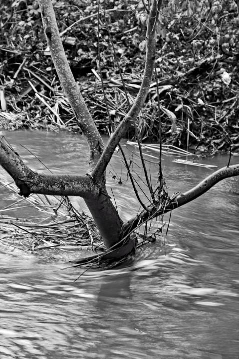 Creek Tree mono