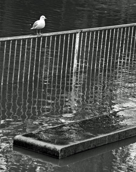 Gull and bench