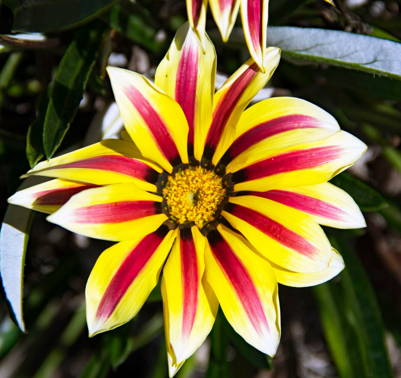 Yellow and red flower2